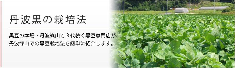 丹波黒の栽培法