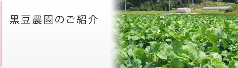 黒豆農園のご紹介