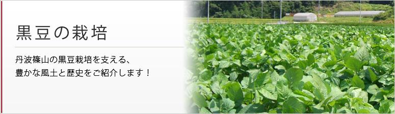 黒豆の栽培