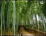 篠山の自然